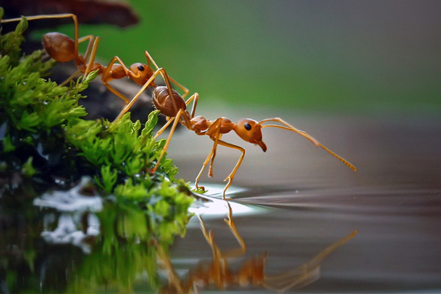 25-reflection photography-by teguh santosa