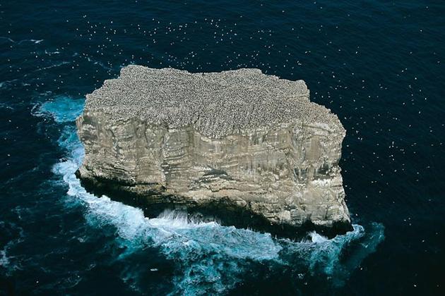 Eldey island-Iceland