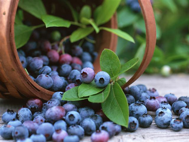 fresh fruits photos-bilberry-fruit