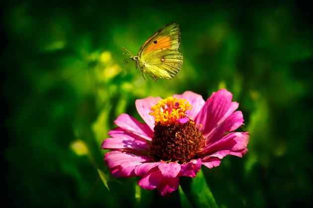 great-butterfly-photography (16)