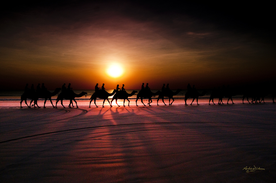 Shadow camels by Lord Veritas