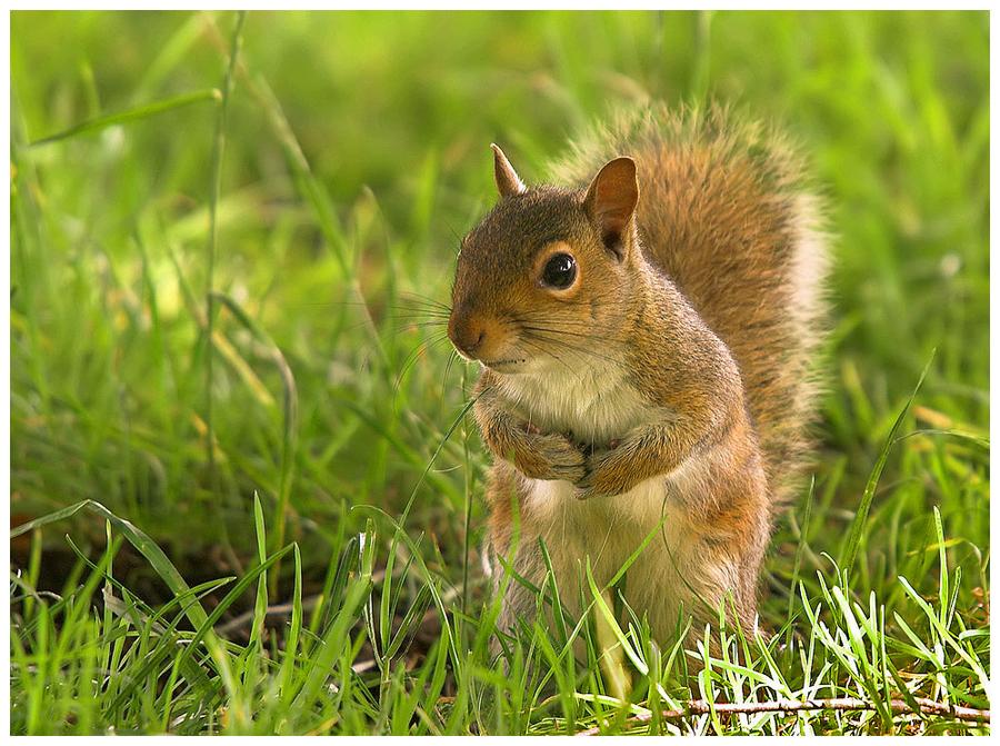 Gathering nuts by Geoffrey Baker