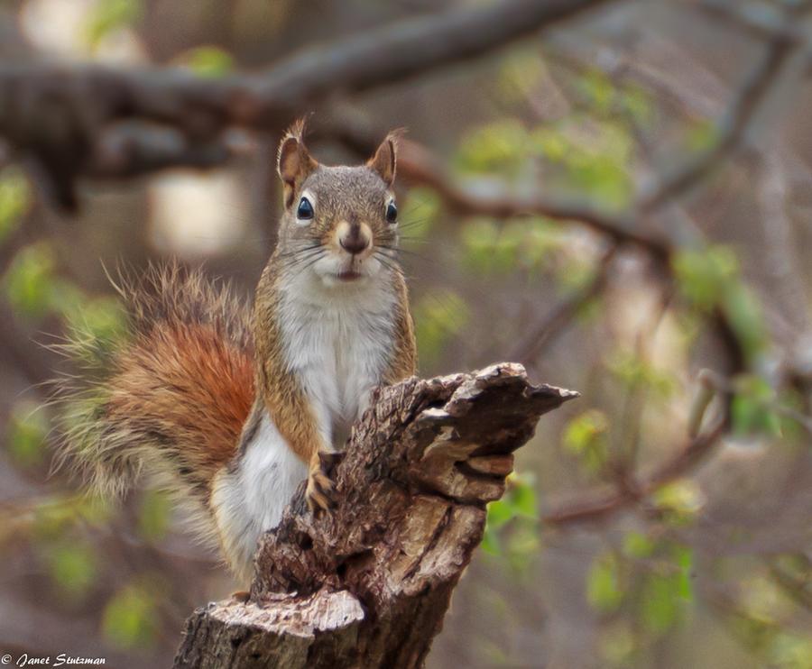 Got nuts by Janet Stutzman