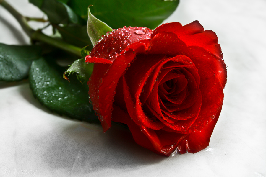Happy Valentines - Red Rose