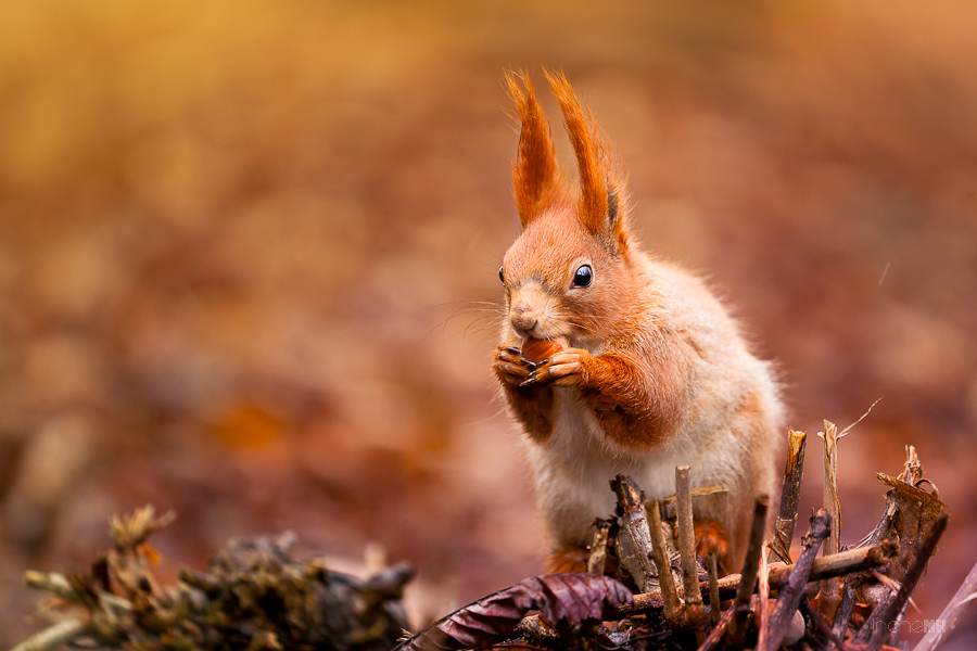 Cute Creature Squirrels Pictures | Great Inspire
