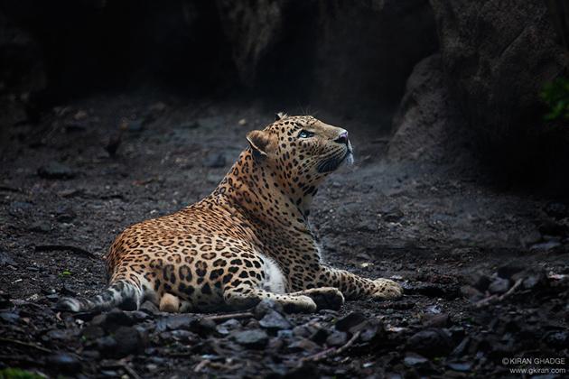 [Image: Captive-by-Kiran-Ghadge-India.jpg]