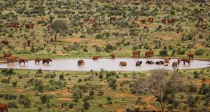red-elephants-stirton_59626_990x742