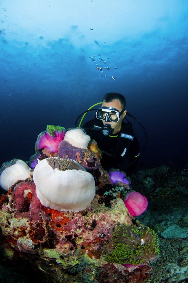 Diving Anenome City by Nigel  Wade