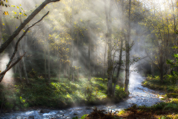 Fog and Sunlight by Miki Asai