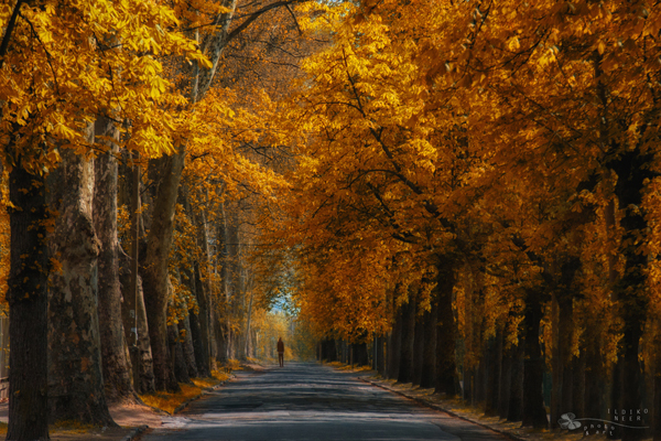Stay or Leave by Ildiko Neer