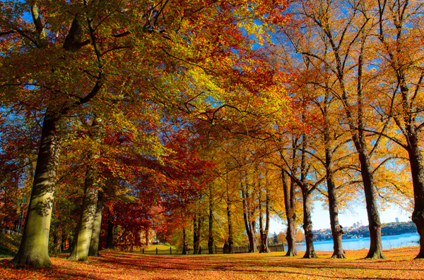 Welcome Autumn by Hector Melo A