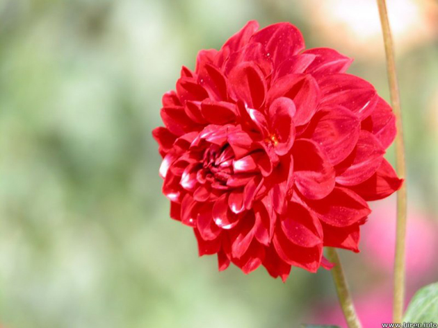 beautiful flower. simple make easy paper flowers fast u fun, Beautiful flower