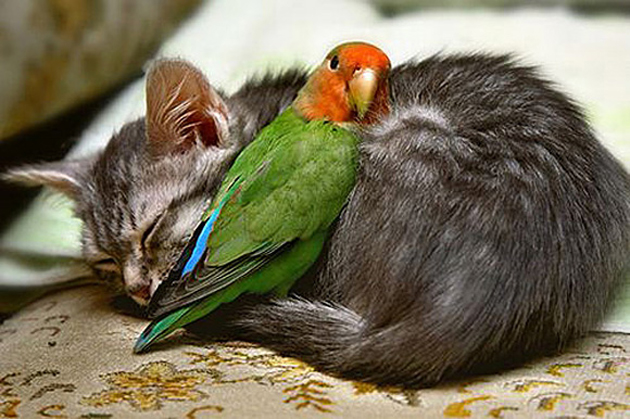 20 beautiful animals love photography great inspire share voltagebd Image collections