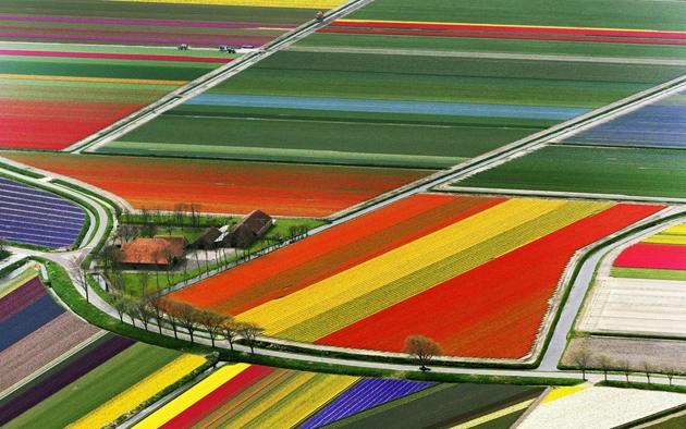 Stunning tulip photography (15)