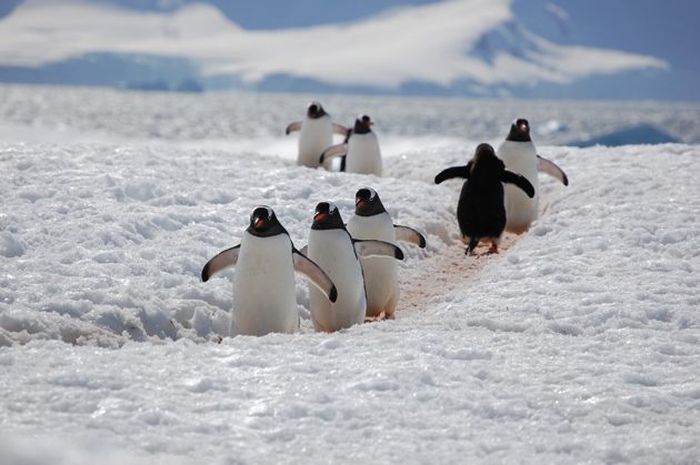 beautiful penguin photography (10)