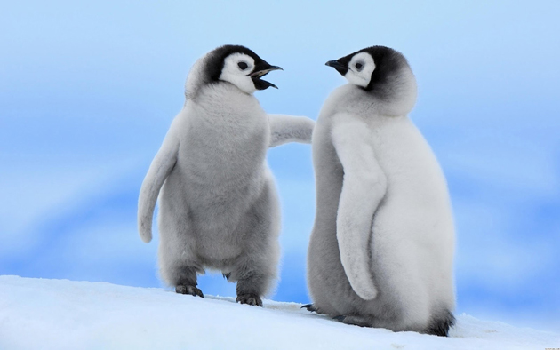 beautiful penguin photography (15)