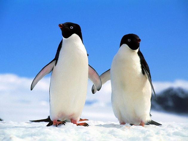 beautiful penguin photography (2)