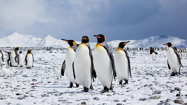 beautiful penguin photography (20)
