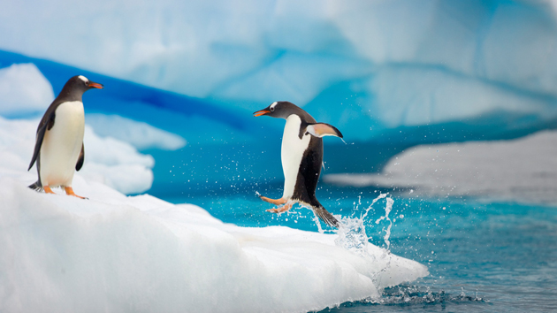 beautiful penguin photography (22)