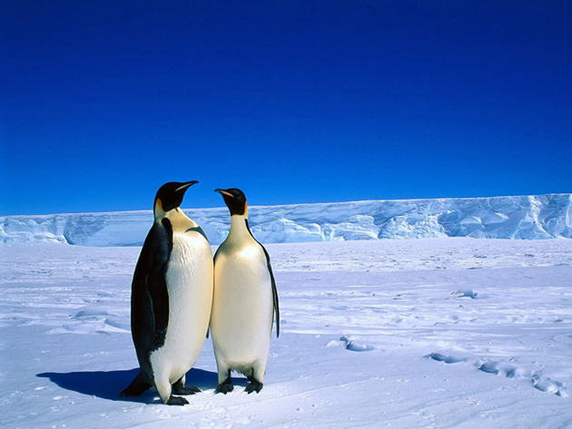 beautiful penguin photography (3)