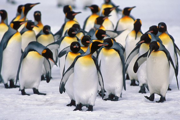 beautiful penguin photography (8)