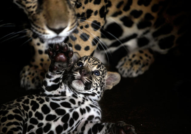 Nicaragua Zoo