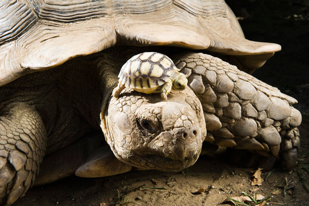 Hungary Tortoise Zoo