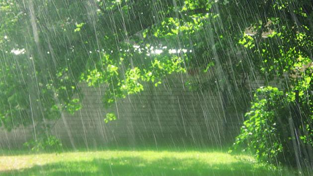 Especially for Rain Lovers (18)