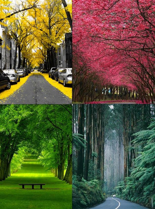 beautiful nature photos (11)
