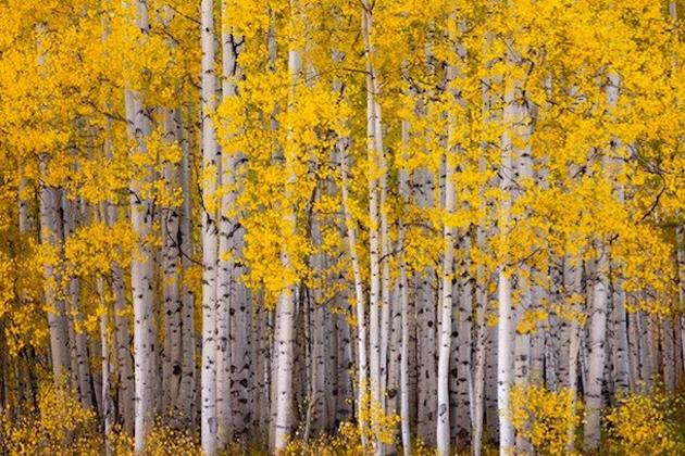 beautiful nature photos (13)