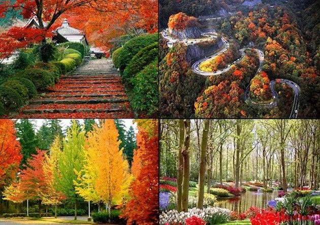 beautiful nature photos (14)