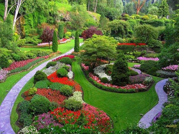 beautiful nature photos (15)
