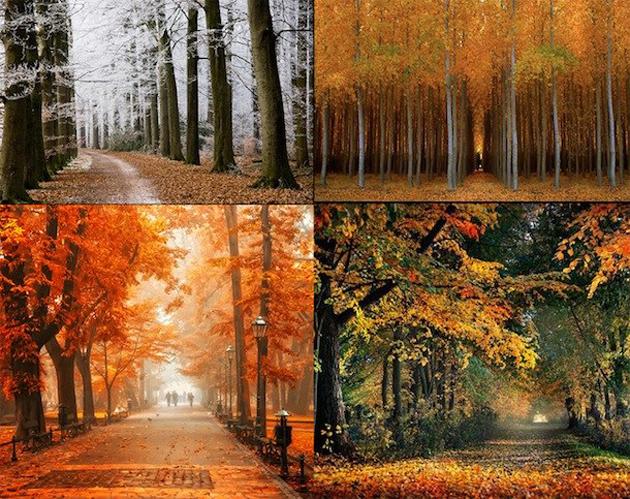 beautiful nature photos (4)