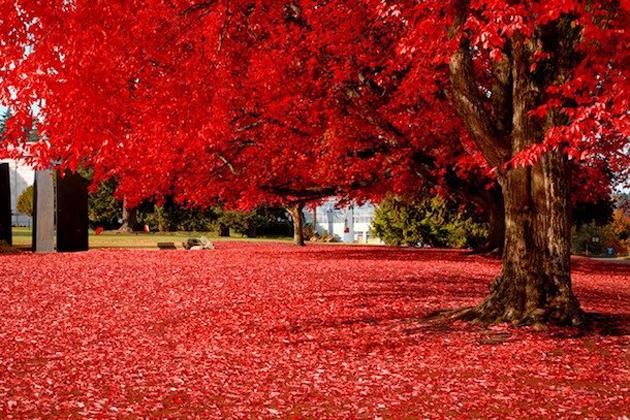 beautiful nature photos (6)
