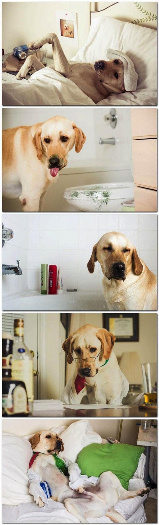 cute photos on dog (14)
