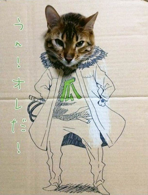 funny cardboard kitty (10)