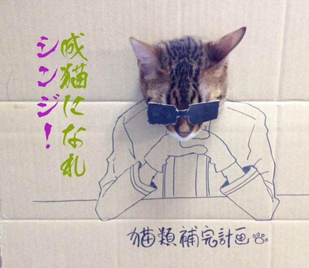 funny cardboard kitty (11)