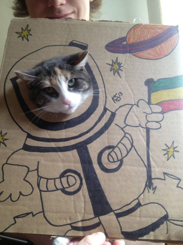 funny cardboard kitty (4)
