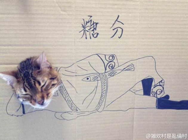 funny cardboard kitty (9)