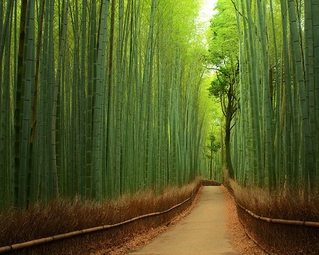 Bamboo-Forest-Japan