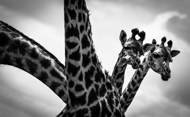 National-Geographic-Photo-Contest-2012 (21)