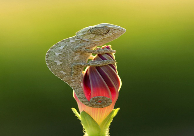 National-Geographic-Photo-Contest-2012 (30)