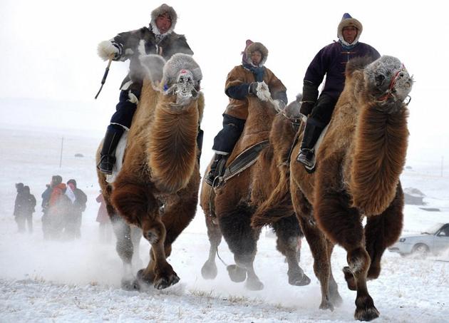 camel-races-mongolia