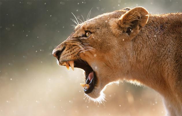fear-my-fangs by johan swanepoel
