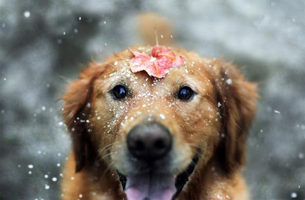 happiest-dog