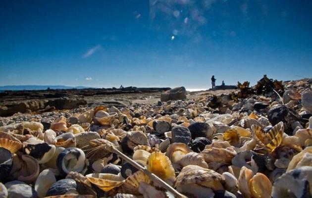 shell-beach-australia-22
