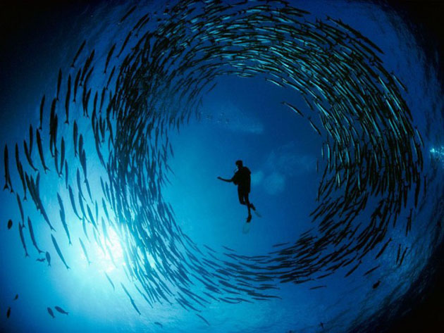 25 GreatInspired Underwater Photography (8)