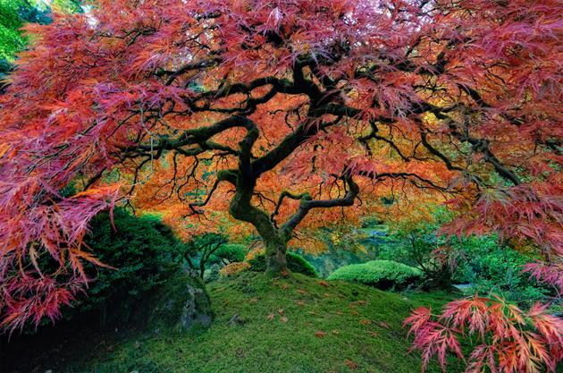 Beautiful Tree Photography (10)