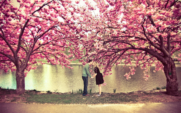 Beautiful Tree Photography (11)
