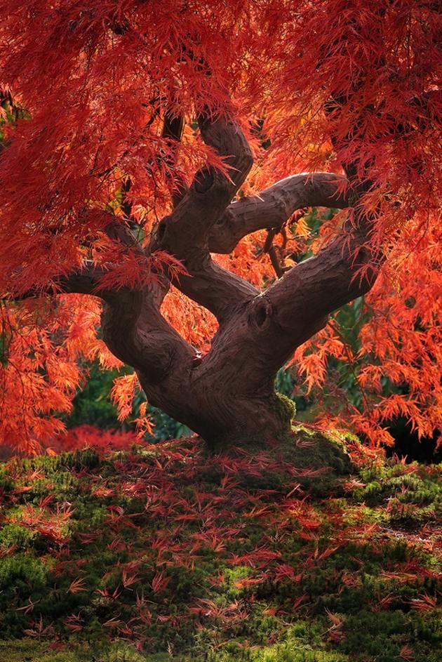 Beautiful Tree Photography (12)